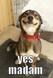 Yes This Is Dog Meme - yes madam quickmeme
