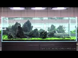 amano aquascape takashi amano beautiful iwagumi style aquascape fish