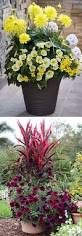 Modern Balcony Planters by 1286 Best Garden Planters Images On Pinterest Gardening Plants