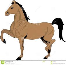 beautiful horse drawing color royalty free stock image image