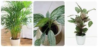 indoor plants that don t need sunlight 12 best plants that can grow indoors without sunlight