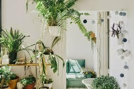 Plants For Bedroom Broccoli City U2013 5 Plants For Your Bedroom To Help You Sleep Better