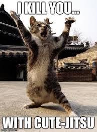 Fu Memes - kung fu kitten meme generator imgflip