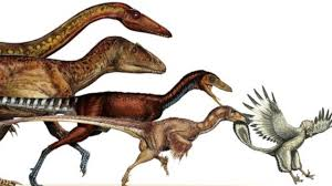 dinosaurs shrank and became birds youtube