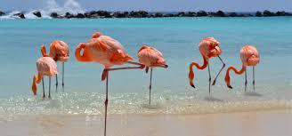 thanksgiving travel packages aruba vacation packages cheapcaribbean com