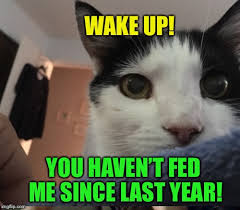 Feed Me Meme - feed me imgflip
