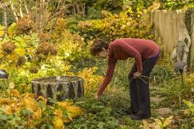 oklahoma native plants as the gardening world embraces native plants a city plot