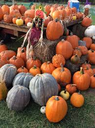 Kc Pumpkin Patch Facebook by Home Page