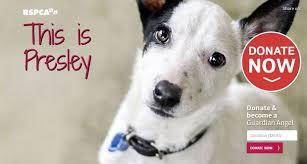 12 christmas gift ideas for your dog dr belinda the vet