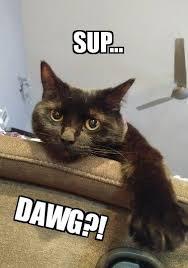 Sup Dawg Meme - sup i m ninja first post on dmania lol steemit