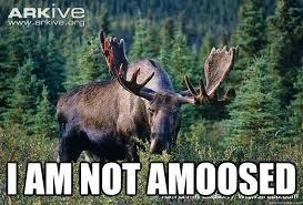 Moose Meme - i am not amoosed another moose meme quickmeme