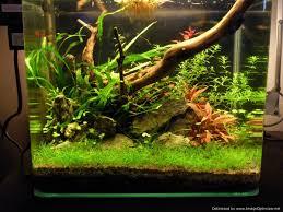 aquarium design exle nano low tech planted tank youtube