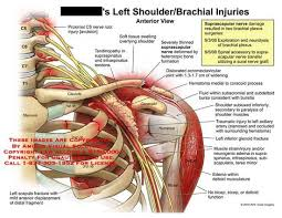 Innervation Of Infraspinatus 74 Best Upper Extremity Images On Pinterest Physical Therapy