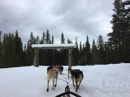 Dog Sledding in Banff Picture of Kingmik Dog Sled Tours Lake