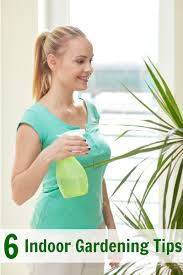 indoor gardening tips for beginners nepa mom