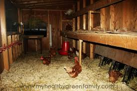 inside chicken house with inside small chicken coop 10595