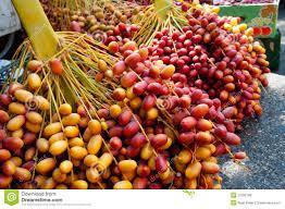 fresh dates fruit fresh dates at jericho market royalty free stock photos image