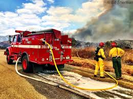 California Wildfire Animal Rescue by Firefighters On The Scene Of The Bogart Fire La Times