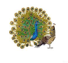 peacock artistry embroidery design collection