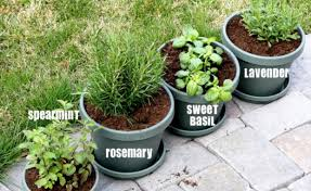 Potted Herb Garden Ideas Container Herb Garden For Beginners Gardening Flower And Vegetables