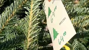 christmas tree prices could be slightly higher this year wcbd news 2