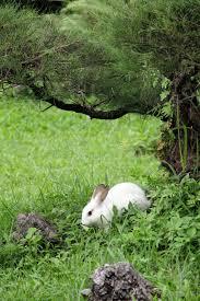 rabbit garden white rabbit in the garden stock photo image of jumping