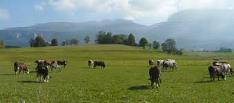 chambre d agriculture d auvergne quelle politique agricole pour quelle agriculture demain sillon
