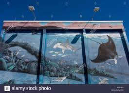 a mural of ocean creatures painted onto a building wall in key a mural of ocean creatures painted onto a building wall in key west miami florida usa