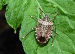10 bugs that are living in your house u2014and how to get them out