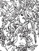 parrot coloring pages a with a parrot coloring page free printable coloring pages