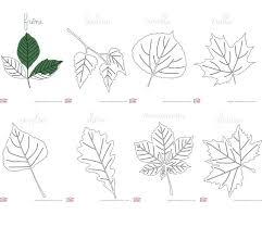 Coloriages de feuilles darbre  Cabane à idées