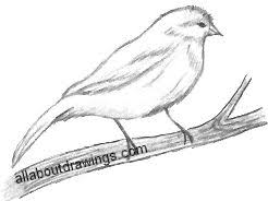 popular bird drawings
