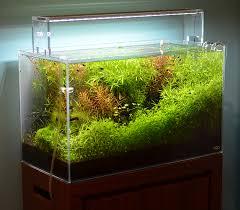 Tropical Aquatic Plants - aquarium zen