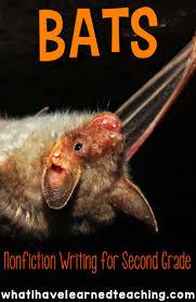245 best bats images on pinterest teaching ideas stellaluna and