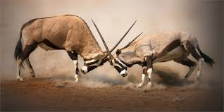 animal fight club national geographic