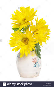 yellow mums as cut flowers in a small pottery vase stock photo