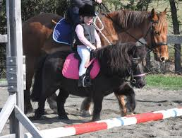 How To Tell If A Horse Is Blind Those First Steps With Horses A Beginner U0027s Guide Horsetalk Co Nz