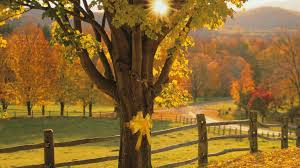 forest leaves autumn trees colours path forest wallpaper windows