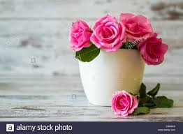 pink roses in a white pot on white wooden background stock photo
