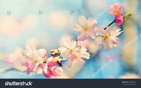 beautiful blossom tree nature scene sun stock photo 588482816
