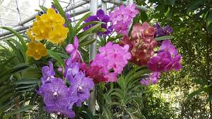 passeggiata tra le orchidee picture of bai orchid and butterfly