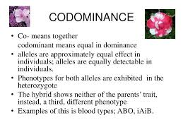 ppt 2 codominance incomplete dominance and multiple alleles