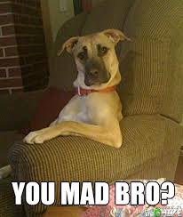 You Mad Bro Meme - you mad bro dog you mad bro quickmeme