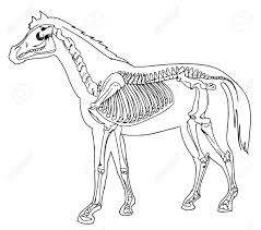 horse skeleton halloween animal skeleton stock photos royalty free animal skeleton images