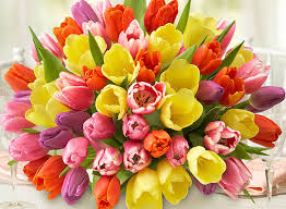 free flowers the best hypoallergenic flowers for with allergies petal talk
