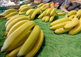 banana halloween bag cavendish bananas could go extinct research says time com