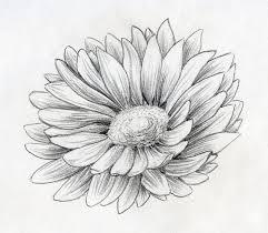 fiori disegni schizzo della matita fiore della margherita illustrazione di