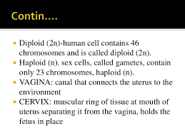 Anatomy And Physiology Place Anatomy And Physiology Of Female Reproductive System