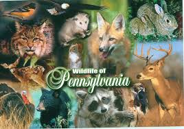 Pennsylvania Wildlife images Pennsylvania wildlife of pennsylvania collage to trade flickr jpg
