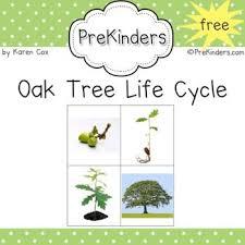194 best creative curriculum tree study ideas images on pinterest